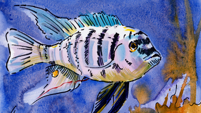 How to paint a Zebra Fish in watercolor - Animal Alphabet Challenge completed