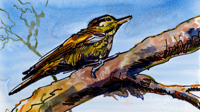 The Sunday Art Show - How to paint a xenops bird on a branch with line and wash watercolor
